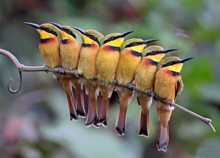 http://www.kulturologia.ru/files/u18476/birds-7.jpg