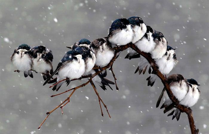 http://www.kulturologia.ru/files/u18476/birds-8.jpg
