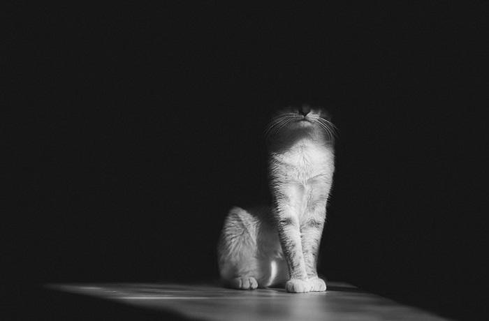 Мистическая жизнь котов в черно-белом свете.