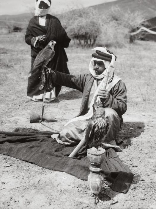 Бедуины использовали птиц для охоты в пустыне, чтобы дополнять свой рацион мясом.