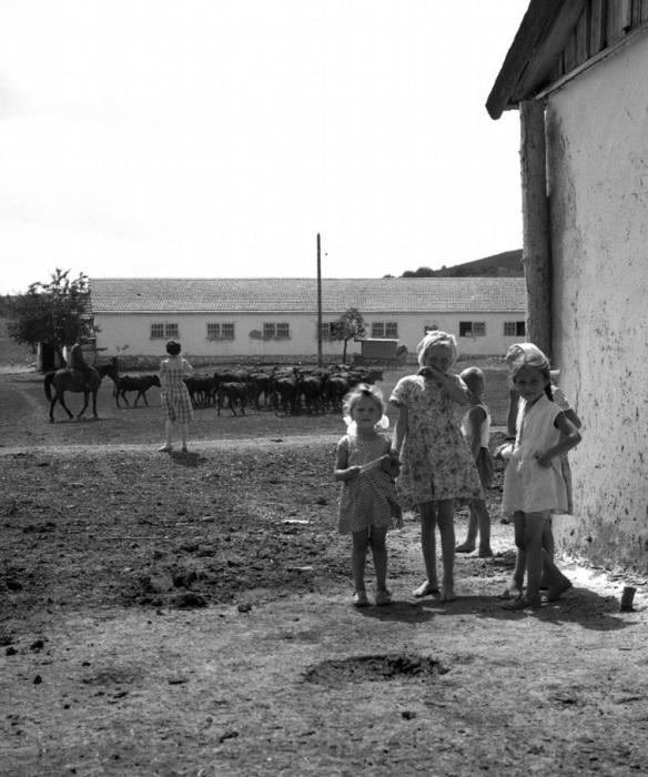 Дети иногда помогали родителям в колхозе, 1963 год.