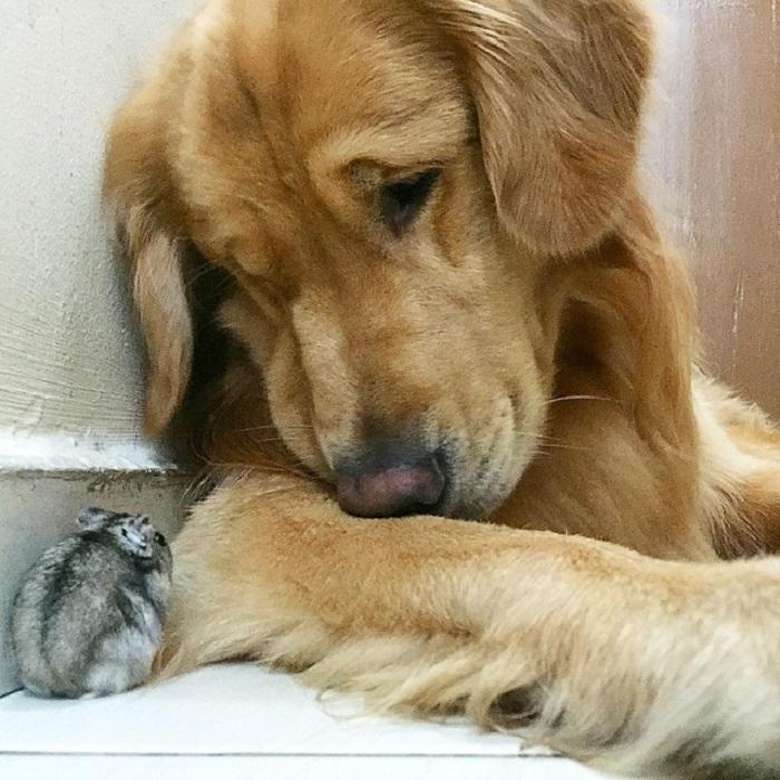 Милые зверьки проводят все время вместе.