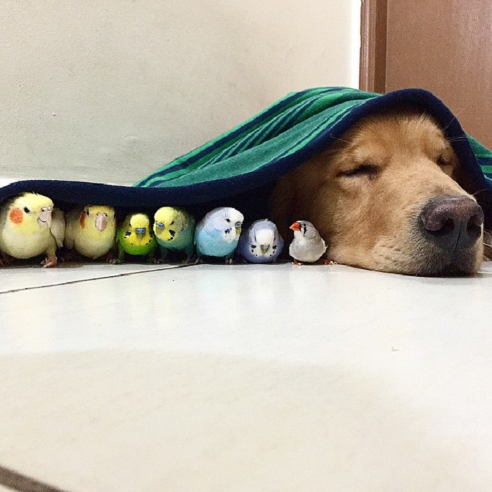 Спят усталые зверушки, птички спят…
