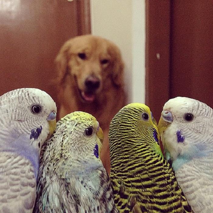 Какие же вы у меня миленькие и маленькие птички...