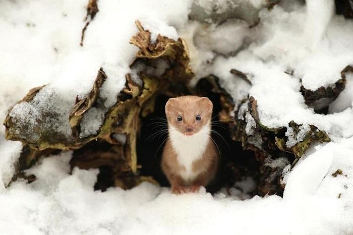 Победители одного из самых престижных фотоконкурсов дикой природы в мире.