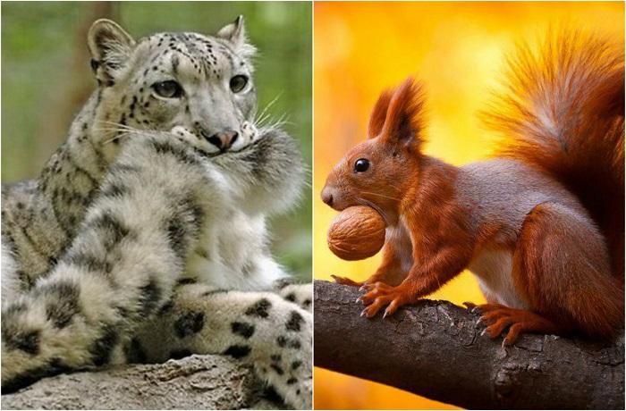 Интереснейшие снимки животных.