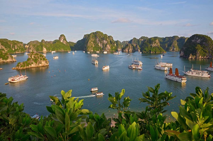 В Бухте, которая находится в Тонкинском заливе Южно-китайского моря на севере Вьетнама находится более 3000 островов, скал, утёсов и пещер.