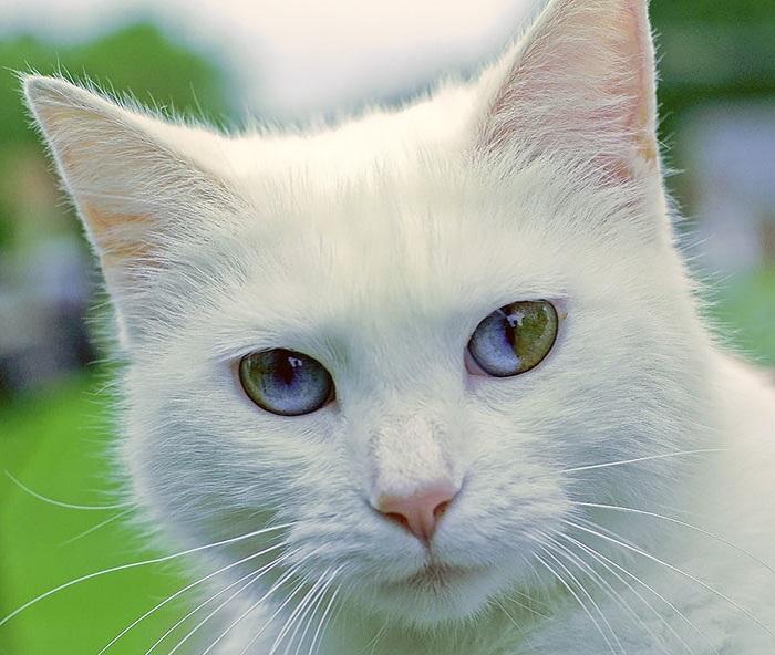 Кошка с глазами, в которых можно утонуть.