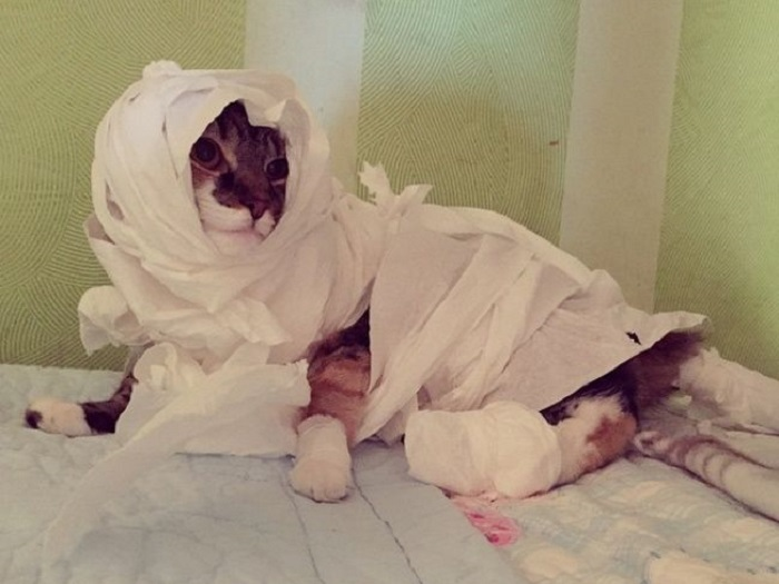 Все коты обожают бумагу, даже туалетную.
