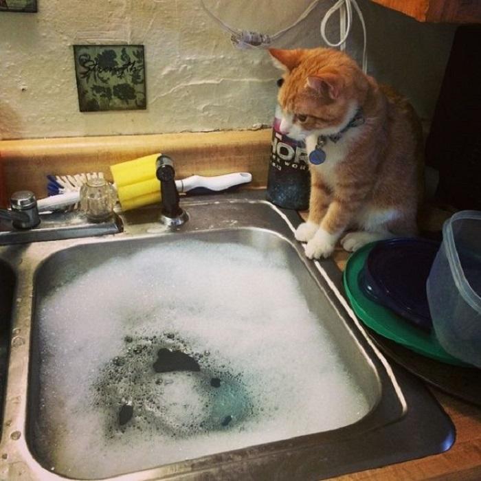 Любитель понаблюдать, как кто-то занимаетесь домашними делами.