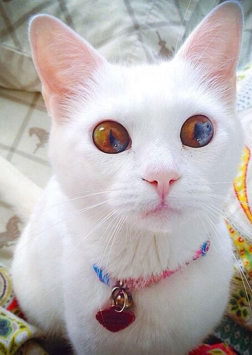 Кошка с жёлто-коричневыми глазами.