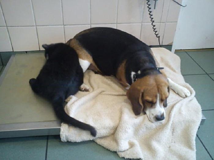 Радеминс старается обнять и согреть попавших в приют больных животных.