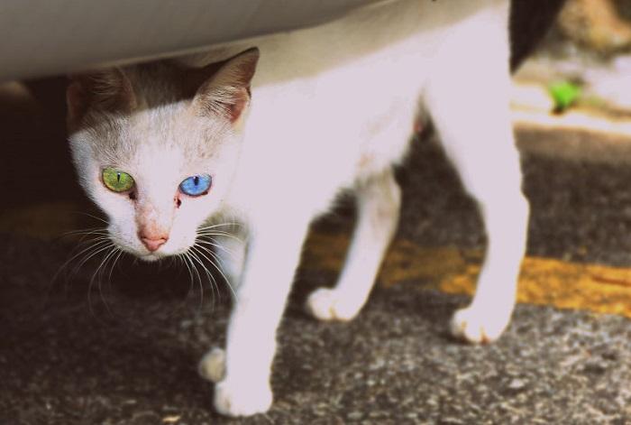 Очаровательная дворовая кошка.