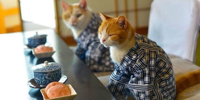 Котейки, готовые к приёму пищи.