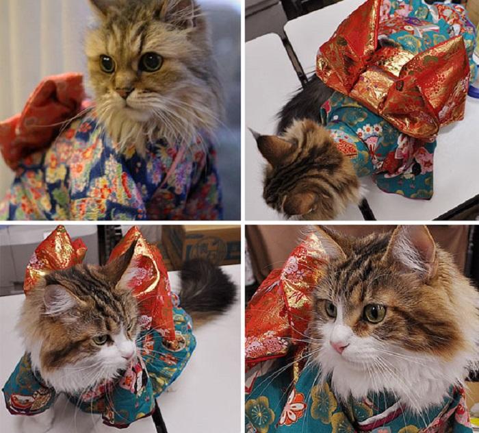 Кошка видимо не очень рада современной моде...