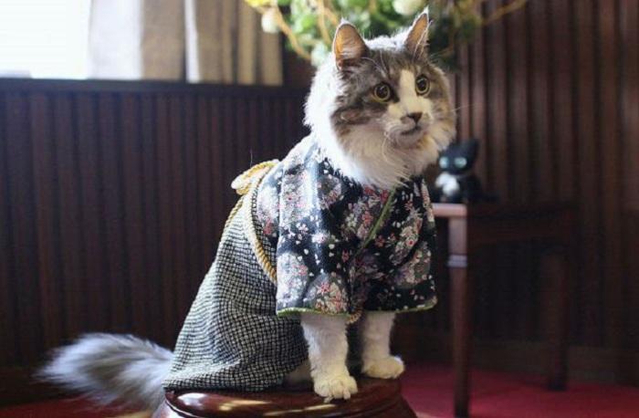 На деловой встрече котов в Японии.