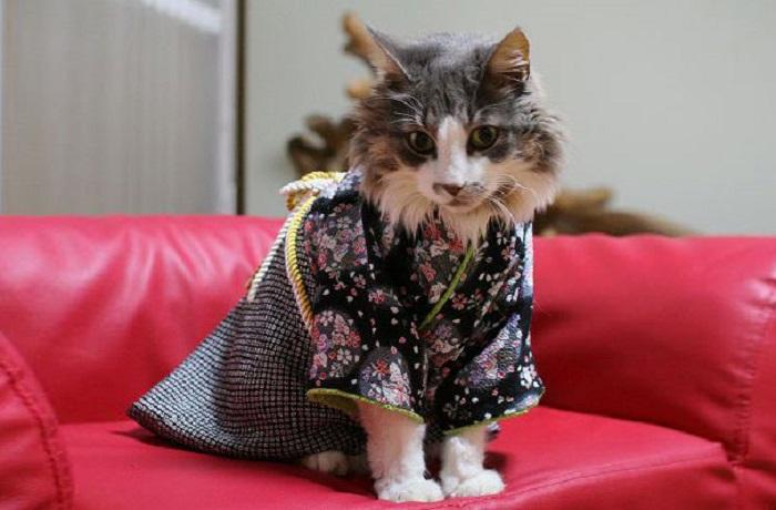 Мур-мяу, и как долго мне сидеть в этой одежде?
