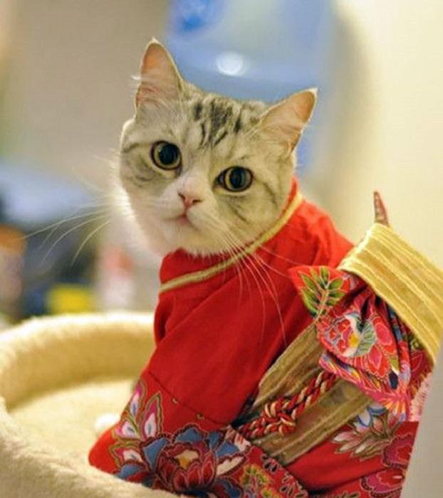 Котейка в японском «национальном костюме».