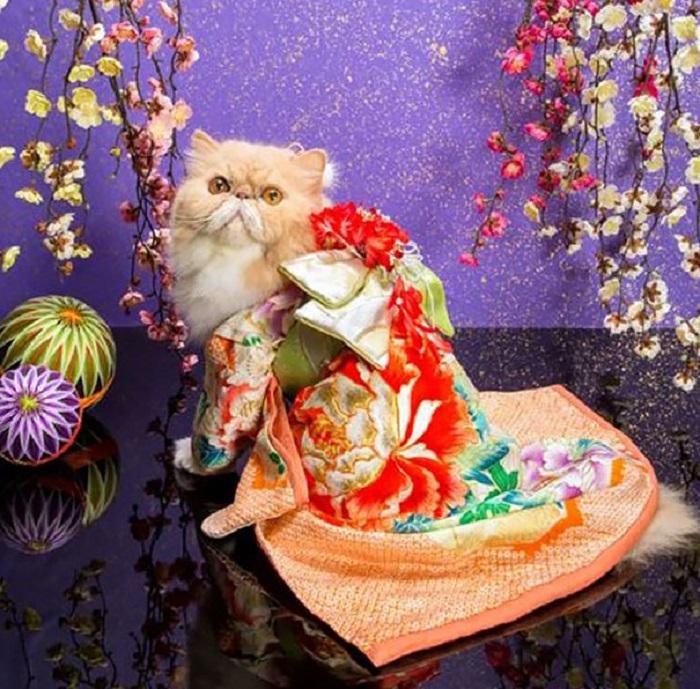 Кошка, облачённая в миниатюрный традиционный японский халат.