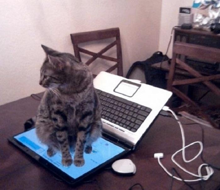 Не сидеть на клавиатуре? Хорошо.