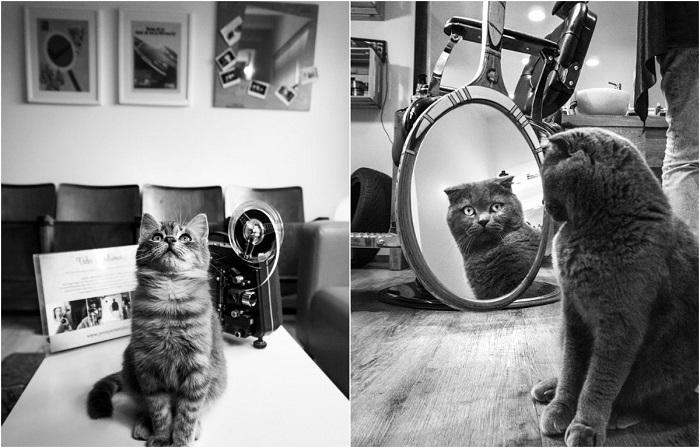 Фотографии кошек, которые живут в местах, где работают люди.