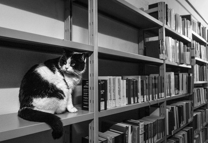 Простите, какую книгу вам подать…?