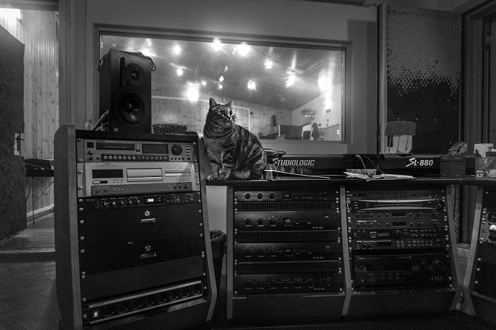 Кот меломан в студии звукозаписи.