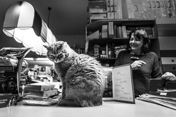 Девушка снимает котов в привычном для них окружении, снимки получаются живыми и естественными.