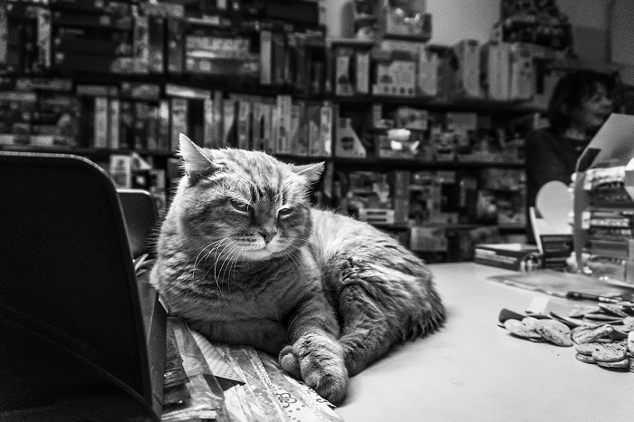 Итальянский фотограф Марианна Зампири проводит много времени, фотографируя кошек.
