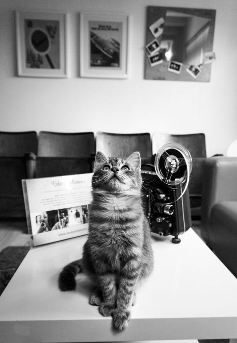 Фотограф Марианна Зампьери снимает животных там, где работают люди.