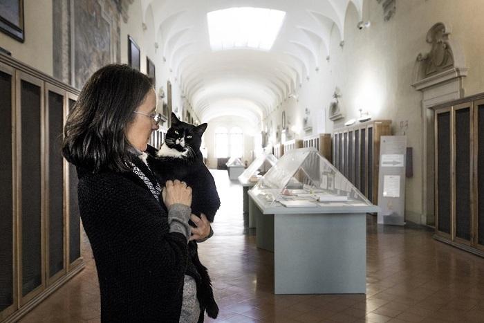 Этот милый котейка поселился в застенках дворца книг.