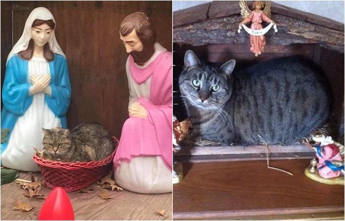 Коты в Рождественских вертепах.