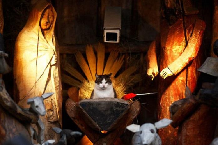 «И принесут мне в дар кошачью мяту, мясные угощения и свежее молоко».