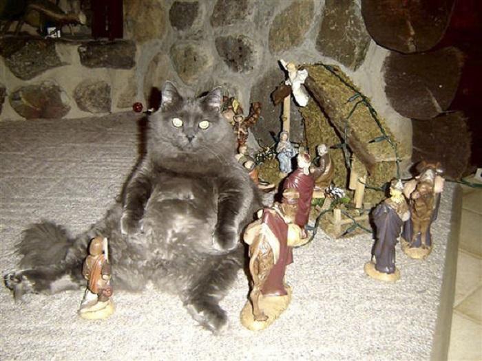 Таким образом кот решил привлечь к себе внимание хозяев, которые почему-то заняты предрождественскими хлопотами и совершенно забыли о таком благородном животном.
