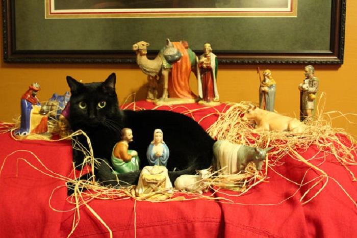 «Наш кот Портер решил присоединиться к рождественской композиции».
