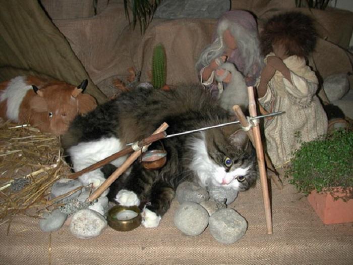 «Наш кот нашел такую сценку странной, поэтому решил, что его небольшой вклад в общее дело приведет к наилучшему результату».