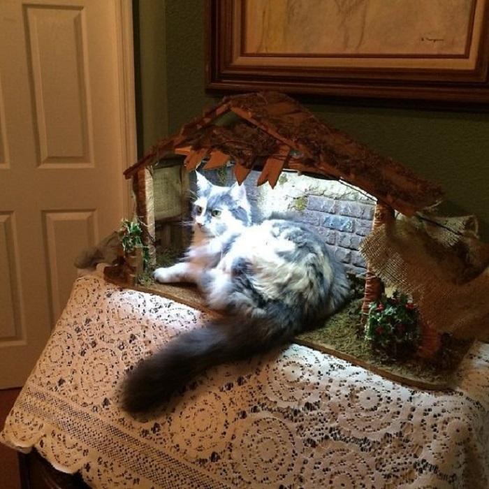 Похоже, что кот сам в восторге от своей красоты и величия…