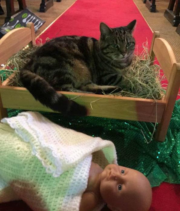 Самоуверенный кот вытолкнул куклу, символизирующую младенца Иисуса, из яслей и сам занял удобное местечко.