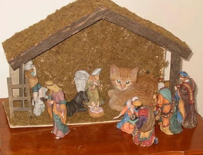 «Наш котенок решил по-своему встретить Рождество».