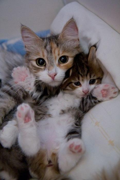 Котёнок с самой любимой мамочкой.
