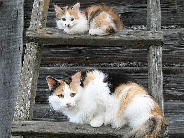 Во мне есть какая-то схожесть с мамой-кошкою.