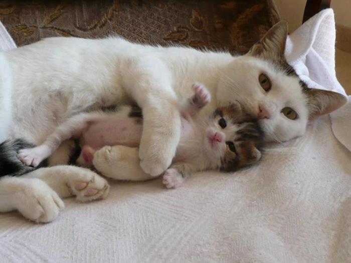 Так, как мама никто не обнимает...