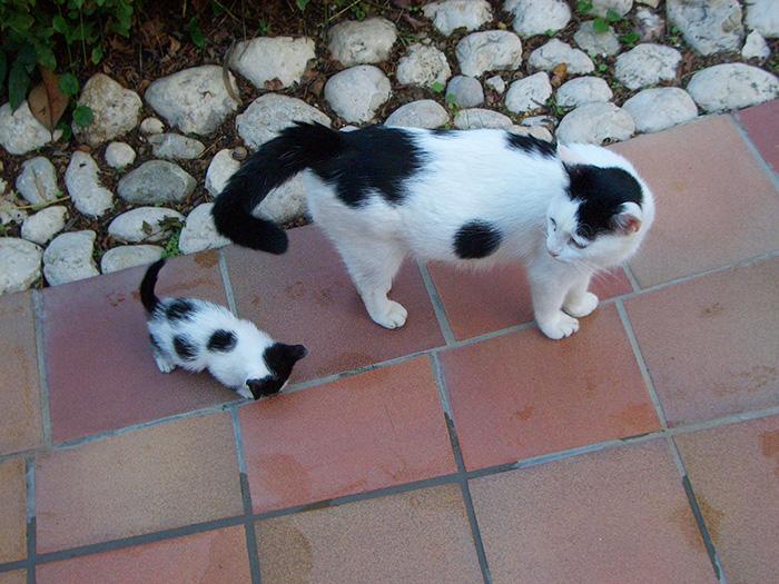 Забавное сходство мамы и котёночка.