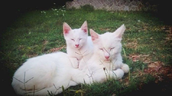 Кошки определённо похожи друг на друга.