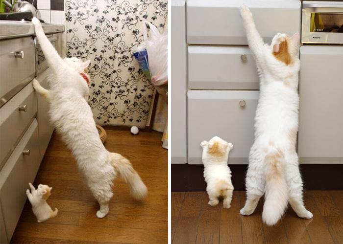 Кошка, которая учит своего малыша добывать еду...