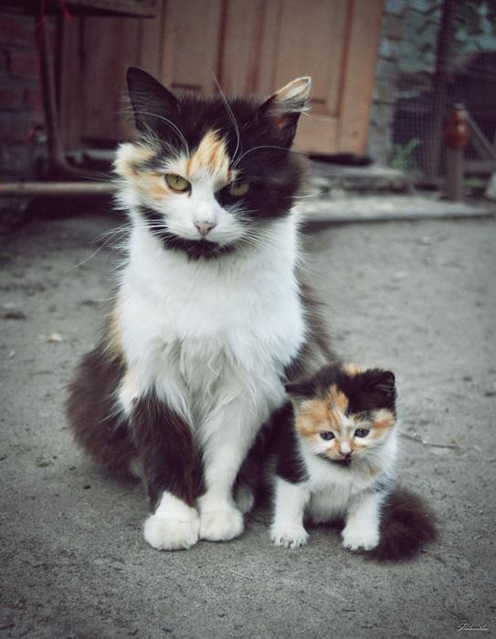 Очаровательные котейки.