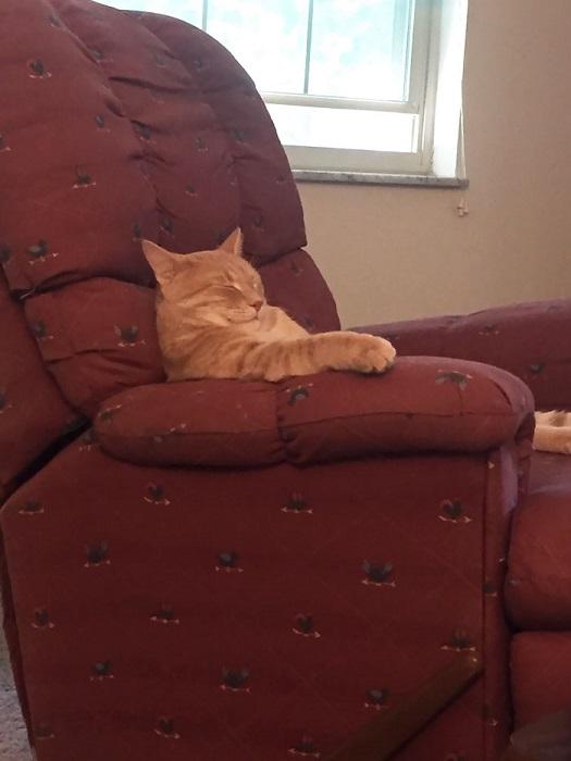 После сытного обеда пойду-ка я вздремну немного.