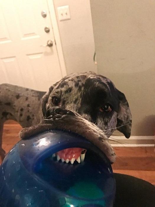 Все зубы на месте, к ветеринару не надо.