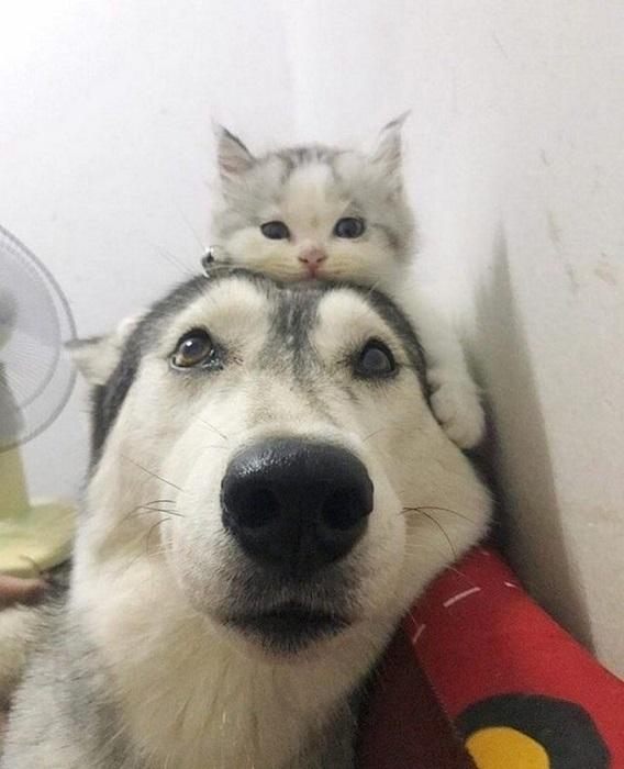 Под защитой старшего друга.