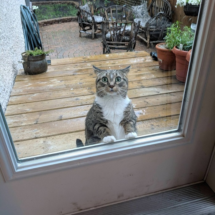 Этот любопытный кот с интересом заглядывает в дом.